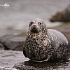 Seal 2