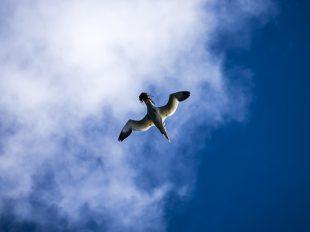 Scottish Wildlife Cruises - Argyll Cruising | Scottish Island Cruises