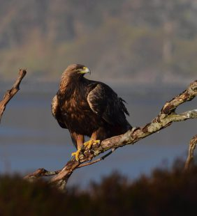 wild scotland|Birding|ArgyllCruising|wildlife|Scotland|cruises