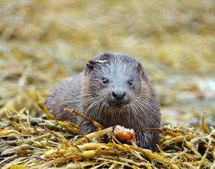 Otter|Wildlife|Cruises