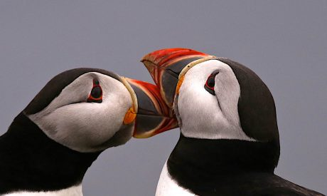 Scotland Wildlife Holiday | Puffin