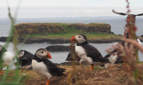 Mini Cruises | Scotland | Puffins | Hebrides Cruise | Cruise Scotland