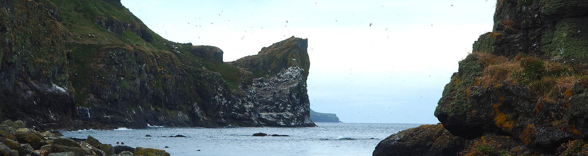 Island of Mull Cruise | Mull | Scotland | Inner Hebrides