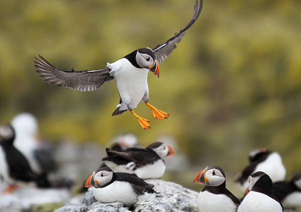 wildlife cruises scotland - scottish cruises